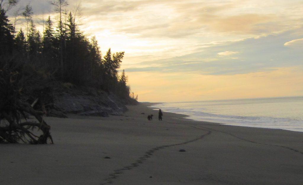 Bears on Beach